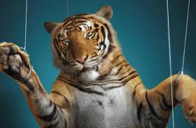 Terni, polemica sui circhi: «Il Comune deve negare le autorizzazioni a chi sfrutta gli animali»